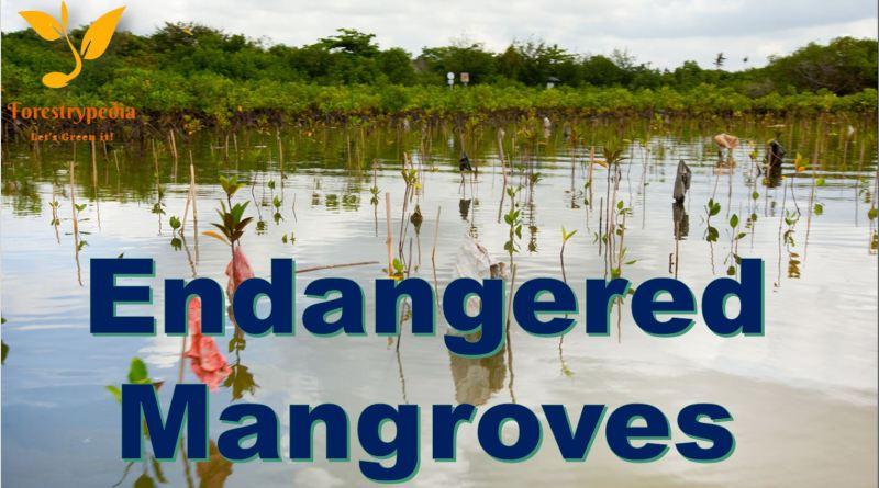 Endangered Mangroves - Forestrypedia