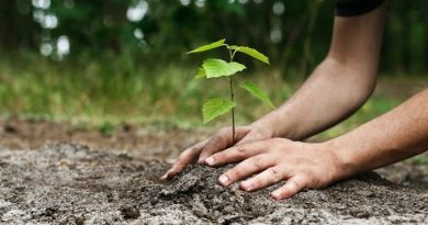 Degrees will not be Given to Students Unless They Plant, at least, One Tree - Forestrypedia