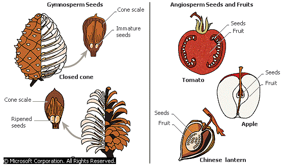 Where did the First Seed come from? - Forestrypedia