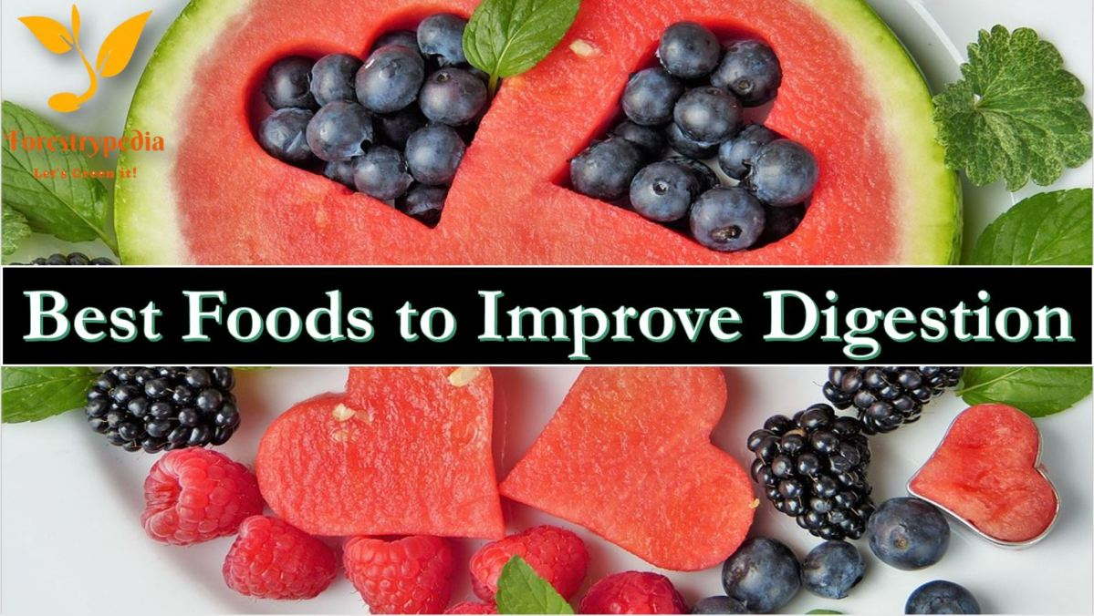 6 Best Foods to Improve Digestions
