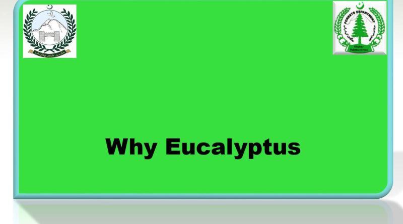 Advantages of Eucalyptus Species - Forestrypedia