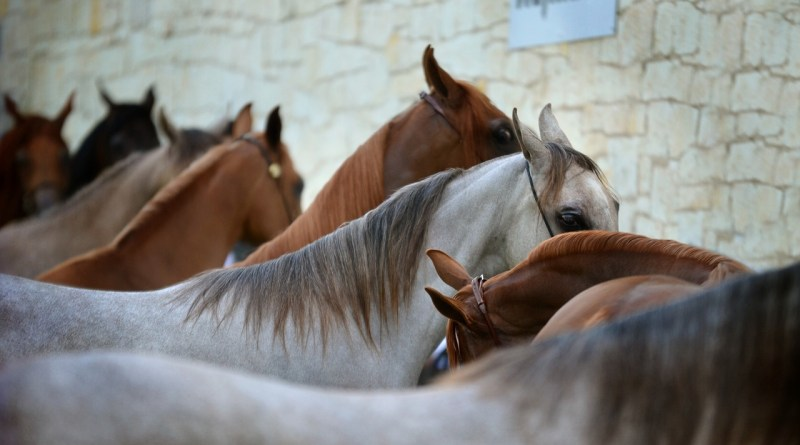 How Horses Sleep or Rest while Standing? - Forestrypedia