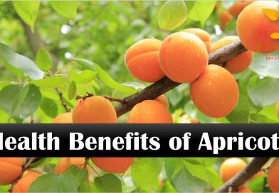 9 Health Benefits of Apricots - Forestrypedia