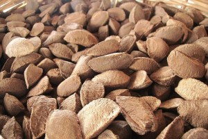 Scientists say that non-timber forest products, like the Brazil nut, should be better integrated into forest management. Photo courtesy of J. Marconi