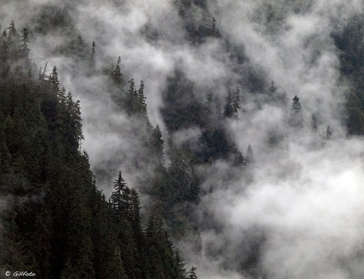 A new theory suggests that forests generate winds to help pump water around the planet. Kenneth J Gill