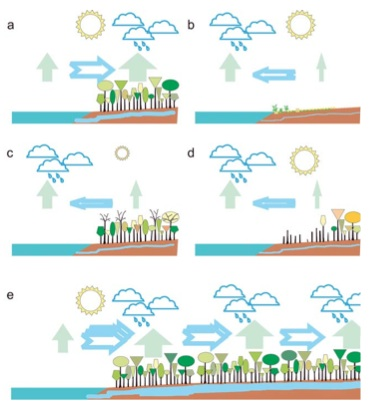 "The ""biotic pump"" model: (a) Under full sunshine, forests maintain higher evaporation than oceans and thus draw in moist ocean air. (b) In deserts, evaporation is low and air is drawn toward the oceans. (c) In seasonal climates, solar energy may be insufficient to maintain forest evaporation at rates higher than those over the oceans during a winter dry season, and the oceans draw air from the land. However, in summer, high forest evaporation rates are reestablished (as in panel a). (d) With forest loss, the net evaporation over the land declines and may be insufficient to counterbalance that from the ocean: air will flow seaward and the land becomes arid and unable to sustain forests. (e) In wet continents, continuous forest cover maintaining high evaporation allows large amounts of moist air to be drawn in from the coast. Source: Sheil and Murdiyarso (2009)."