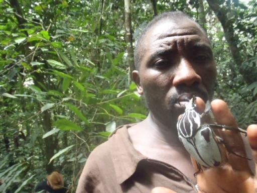A local collector in Cameroon with a Goliath beetle - the 4th largest beetle in the world. Fogoh Muafor