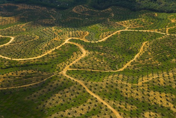 sabah, boreno, malaysia, deforestation, palm oil, oil palm