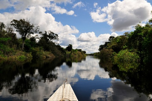 Picture shows a general view of the Amazon - Brazil, 2011. CIAT/Neil Palmer