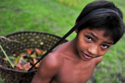 Una investigación muestra que casi la mitad de las especies de árboles en el Estado brasileño de Pará valoradas por los pequeños agricultores porque cubren sus necesidades nutricionales y sanitarias, también se talan para obtener madera. CIAT/Neil Palmer