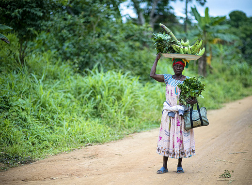 Forests have long been a crucial source of nutritious food for people in Central Africa. Ollivier Girard/CIFOR