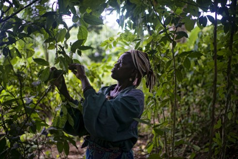 Differences between men and women need to be considered when designing forest management strategies for the Congo Basin. Ollivier Girard/CIFOR.
