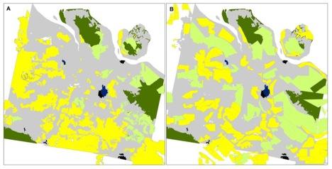 Panel A: Peta penggunaan lahan dibesarkan menggunakan citra pra-kebakaran LANDSAT 8 dimana area kuning dan hijau muda adalah sistem mirip-persegi minyak sawit dan akasia, dipertimbangkan, mencirikan perusahaan, dan area abu-abu adalah wilayah yang didominasi oleh paket lahan beragam bentuk, ukuran dan arah, mencirikan aktor tingkat kecil dan menengah. Panel B: Peta konsesi minyak sawit (kuning) dan akasia (hijau muda) dimiliki oleh perusahaan menurut peta penggunaan lahan pemerintah pusat dan provinsi. Area hijau tua adalah hutan alam tersisa, area hitam adalah kota besar, dan area biru tua adalah zone minyak dan gas.