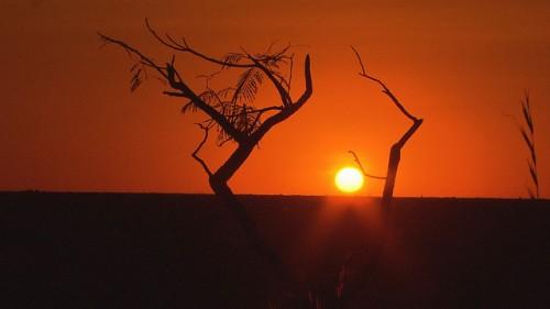 O Cerrado requer atenção especial  — conciliar o desenvolvimento e a conservação para assegurar que a região não seja perdida. TV Brasil - EBC