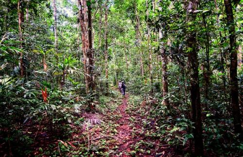 """""""Lo que algunas personas califican como bosque degradado, podría no serlo para otras"""", dice Manuel Guariguata, investigador principal del Centro para la Investigación Forestal Internacional (CIFOR). CIFOR/Marco Simola"""