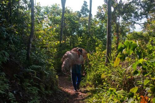 Hutan di Nusa Tenggara Timur memainkan peranan penting bagi penghidupan. Peran apa yang akan dimainkan hutan dalam Tujuan Pembangunan Berkelanjutan? Foto CIFOR