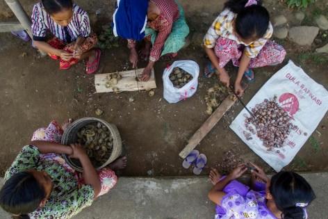 Fruits de la forêt: les villageois coupent fruits de palme, la province de Jambi, Indonésie. Tri Saputro/CIFOR photo