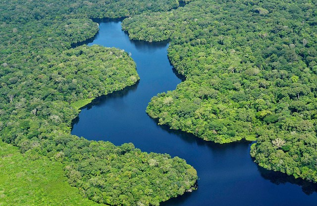 A river winds its way through a tropical forest