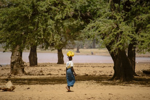Una mujer lleva alimentos a casa cerca del Lago Bam, en Burkina Faso. Estudios de comunidades locales revelaron que cambios en la toma de decisiones relacionada con el cambio climático no llegaron a afectar a toda la comunidad local, pues los migrantes fueron a menudo excluidos de las instituciones. Foto Ollivier Girard/CIFOR.