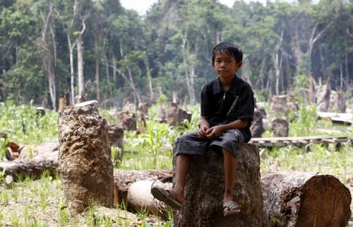 Un niño sentado en un tocón en Kalimantan Central, Indonesia. Según estudios recientes, las comunidades forestales, como a la que el niño pertenece, pueden ayudar a reducir las emisiones de carbono, siempre y cuando se les reconozcan los derechos legales sobre sus bosques. Fotografía de Achmad Ibrahim / CIFOR.