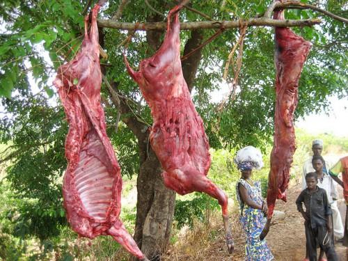 Antilope à vendre en Guinée, Afrique. Des dizaines de millions de personnes en Afrique de l'ouest et centrale se dépendent sur la viande de brousse pour la sécurité alimentaire. Terry Sunderland/CIFOR photo