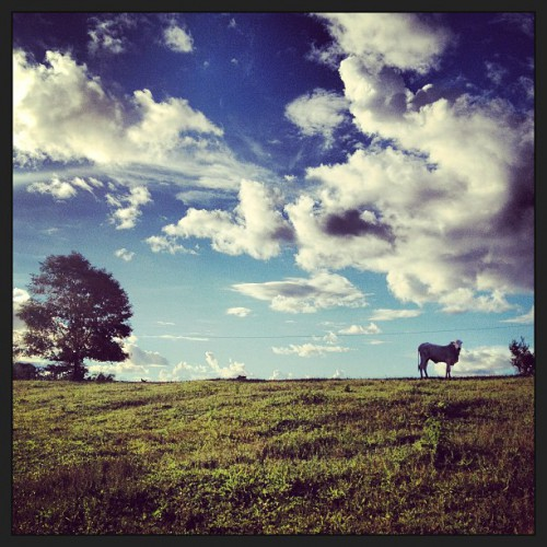 Cattle farming in Acre, Brazil  Photo by Kate Evans
