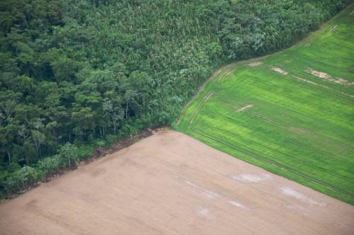 Bosques y  tierras de cultivo en Santa Cruz, Bolivia. Este país sudamericano, famoso por haber concedido derechos legales a la naturaleza se encuentra ante una encrucijada: cómo conservar sus bosques y, al mismo tiempo, alcanzar la soberanía alimentaria. Fotografía de Sam Beebe / Flickr.