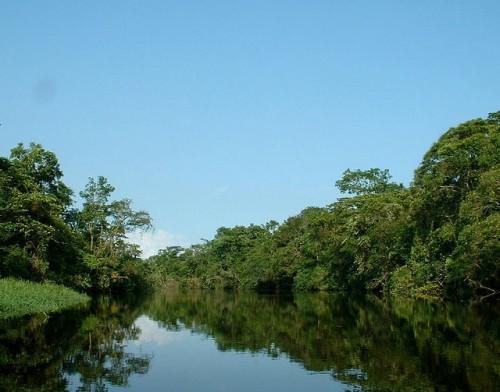 Bosques cerca de la costa atlántica de Brasil. Los esfuerzos del país por restaurar sus bosques atlánticos han tenido éxito en parte debido a la participación de los grupos de interés y a que se tomaron en consideración todos los usos del suelo, no solo la conservación. Fotografía de Robertcurtin / Flickr.