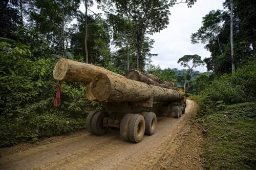 Un camión maderero recorre un camino en el sur de Camerún. Los caminos de explotación forestal pueden ser útiles para estimar la degradación de los bosques, según señala una nueva investigación. Fotografía de Ollivier Girard / CIFOR.