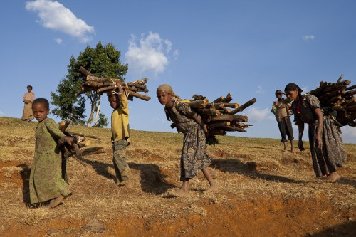 """Ethiopian women and children usually spent hours for collecting firewood. A reduction of this hard work is a positive side effect of the """"Mirt"""" stoves in the Kafa Biosphere Reserve.  Foto: Bruno D'Amicis"""