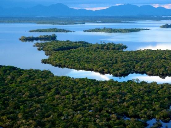 Une surveillance high-tech des forêts pour atténuer le changement climatique