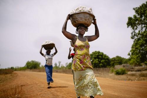 Kaum perempuan mengangkut kapas yang baru dipanen di Burkina Faso. Berbagai model pembangunan yang menggunakan ukuran pertumbuhan atau produktivitas kurang menghargai kontribusi kaum perempuan pada pertumbuhan ekonomi, ujar seorang peneliti. Ollivier Girard/foto CIFOR