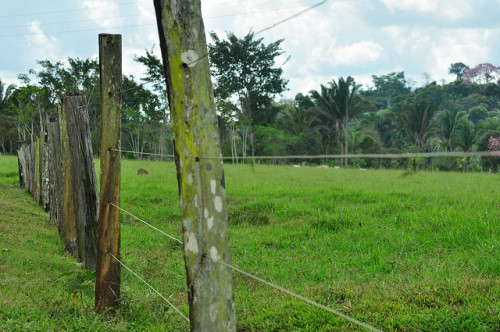 Tierras cercadas en zona boscosa de Mato Grosso, Brasil. Foto Icaro Cooke Vieira / CIFOR.