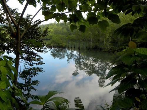 Paisaje de Osa, Costa Rica. Foto de Reinaldo Aguilar.