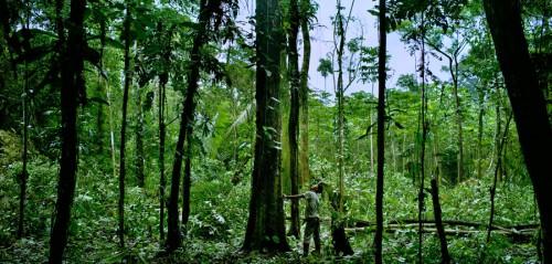 ¿Qué es? y ¿a quién se paga el derecho sobre el carbono que captura la biomasa en un territorio boscoso? Foto: Tomas Munita