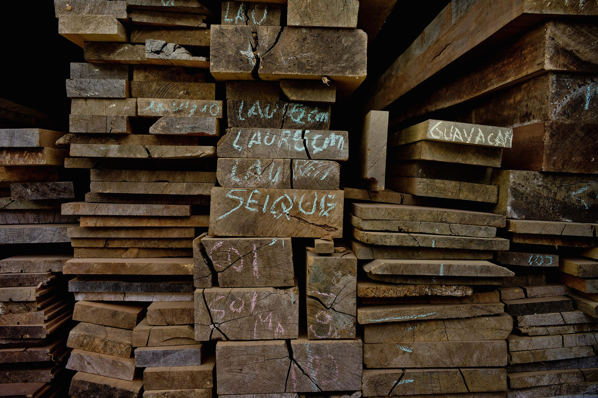 Alternative approaches to illegal logging