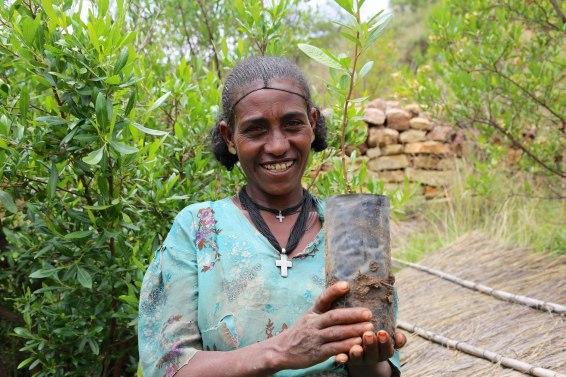ethiopia, tree planting, ethiopia forest