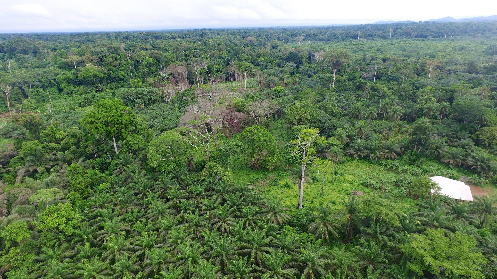 """In complex palm industry, """"certified sustainable"""" falls short"""
