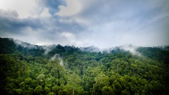 COP23 Special: How land and forests can help meet global goals on climate