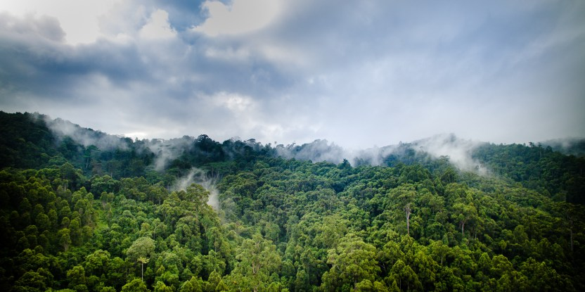 weather, stable climate, nature, forests