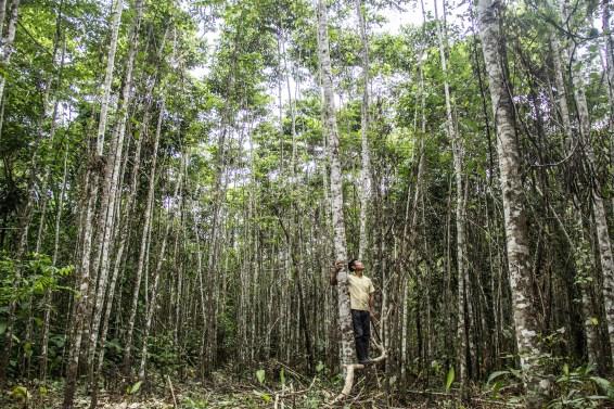 Tree plantation, agroforestry, landscape restoration