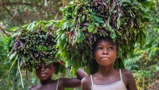 Threats to Congo peat forests put people, wildlife and climate goals at risk