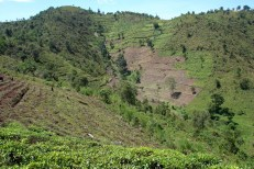 Permalink to: Hindering instead of helping in Uganda