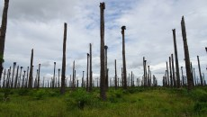 Oil palm landscapes: Sketching out sustainable futures