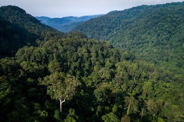 ¿Qué está pasando con los bosques del mundo? Reflexiones del Director General de CIFOR