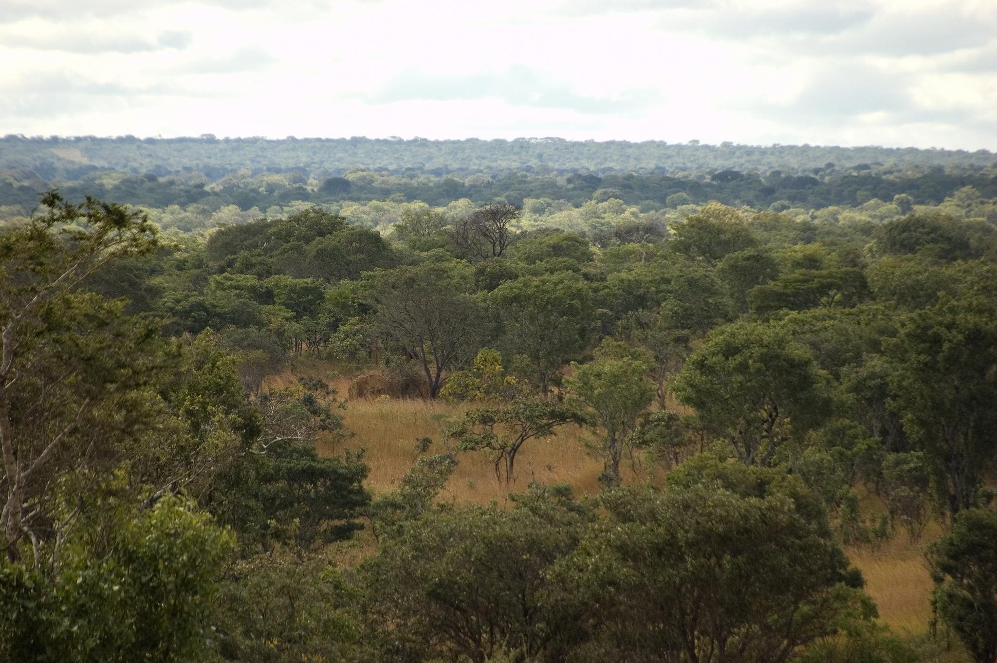 A Ponzi scheme with Nature?
