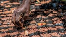 Los beneficios financieros y para la seguridad alimentaria de la restauración del paisaje forestal