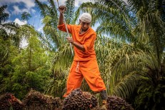 Permalink to: Palm oil's complex land conflicts