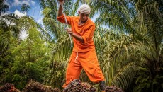 Palm oil's complex land conflicts