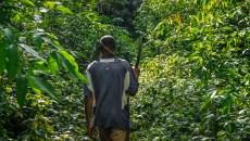 Les cartes de l'ère du Congo belge révèlent les secrets d'un arbre africain précieux